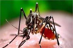 now dengue stings with corona