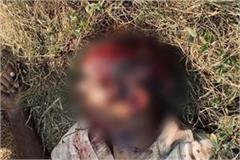 ludhiana a man cut by sharp weapons