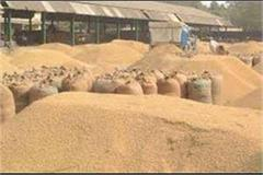 government has purchased paddy worth rs 120808 81 lakh