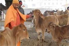 cm yogi said about cow protection organize program on gopashtami