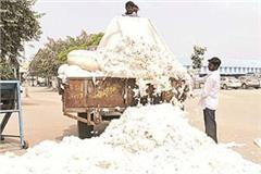 30 rupee rise in cotton prices in northern regional states