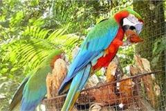 foreign birds will become  pride  of punjab