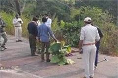 continuation of tiger death in panna tiger reserve