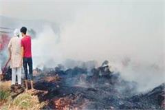 jungle millet crop ashes from fire fire brigade got control after much effort
