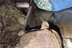 smuggler arrested with 10 bags of poppy doda