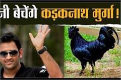 mp s rooster will be sold in ranchi cricketer dhoni will start business