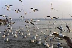 the confluence of siberian birds the sangam beach