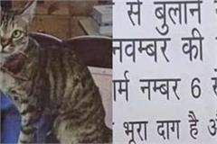former chief election commissioner s cat  hiver  missing