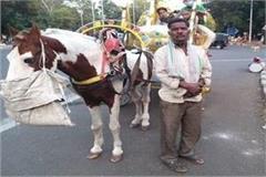 the effect of corona on married horsemen