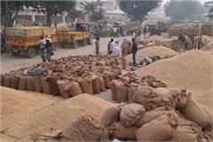paddy price increase by rs 200 to 300 in gohana grain market