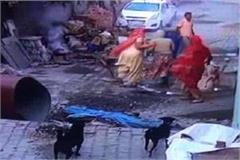 woman beaten up by neighbors for providing shelter to destitute dogs