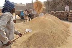 paddy  yields in punjab in record quantity this year
