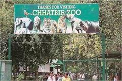 chhatbeer zoo will open from today