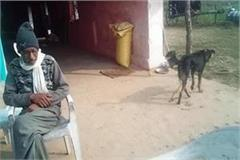 the farmer gave half the property to his dog and wife