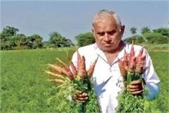 the company sold inferior seeds in the name of carrot one feet long