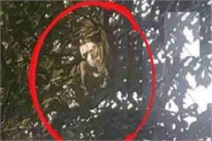 monkey climbed the tree with bundle of notes of elderly who came to register