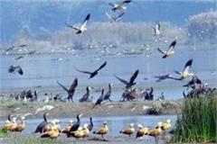 6 wetland of punjab got title of international wetland