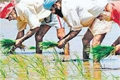 review of minimum support price policy is fatal for farmers of punjab
