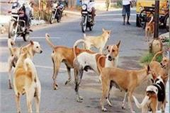 dreadful deeds of dogs made innocent by breaking innocent serious