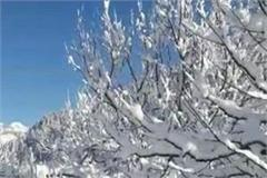 glacier recharging for fresh snowfall tree plants in kullu