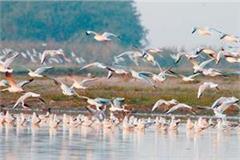 birds arriving at wetland from all over the country