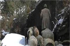 heavy snowfall increased the problems of animals and livestock