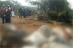 banda 21 cows suffering from painful death due to high tension wire
