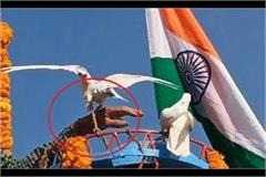 birds held hostage on republic day