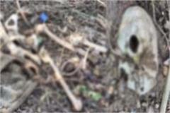 sensation-extend-due-to-found-of-male-skeleton-in-hamirpur