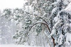snow started in himachal s high areas