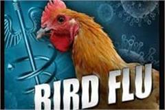 after the corona virus now the risk of bird flu testing of foreign