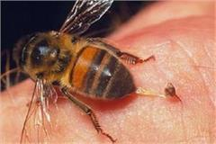 bee sting heavy on girl students stir in school premises