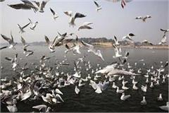 up government will take important steps for birds will be organized  wetland