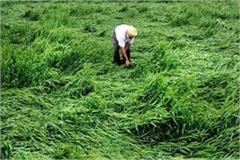 case of loss of crops in the assembly