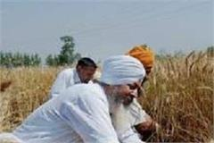 punjab supplied wheat and rice to another states