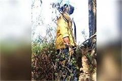 dead body of youth was found hanging with tree