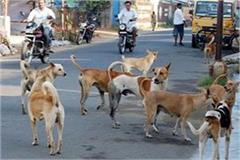 terrorism of stray dogs continues to increase in the city 18 people
