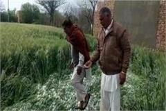 hailstorm and raining in villages of fazilka