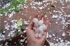 farmers of mp were destroyed with corona due to weather