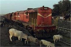 tragic accident 15 cows killed 3 injured due to train collision