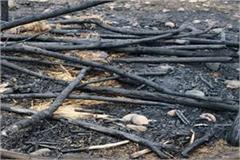 tragic accident burning of three children in dindairi district