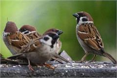 world sparrow day give protection so that their tweet remains intact