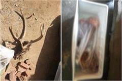 nahan house fridge sambar meat recovered