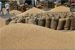 so far 3507431 mt wheat has been procured in punjab