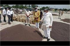 agriculture minister took stock of mustard purchase