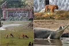 up first case of bird flu found in kanpur zoo zoo closed for visitors