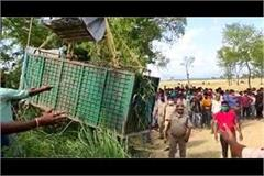 the leopard harassing the villagers was imprisoned in a cage