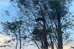 leopard enters village stampede ensued police and forest department