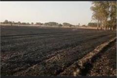 11 bigha wheat s standing crop burnt in children s games