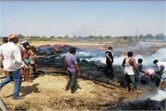 millions stand wheat crop burnt to ashes due to fire in satna distt of mp